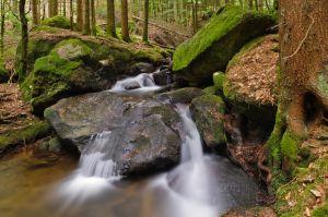Schwarzwald-37.jpg