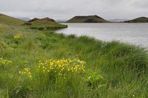 Island-46.jpg