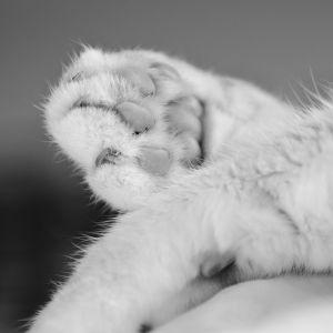 Katzen-15.jpg