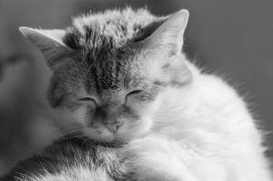 Katzen-16.jpg