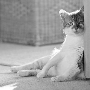 Katzen-17.jpg
