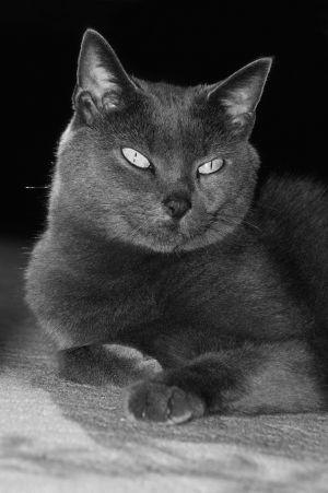 Katzen-19.jpg