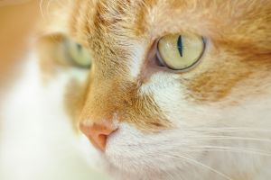 Katzen-2.jpg