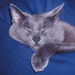 Katzen-20.jpg