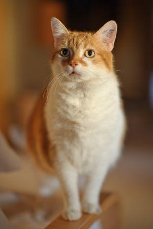 Katzen-22.jpg