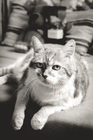 Katzen-23.jpg