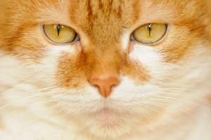 Katzen-6.jpg