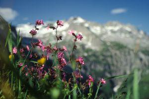 Berge-65.jpg
