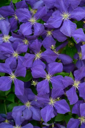 Flora-31.jpg