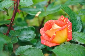 Flora-33.jpg